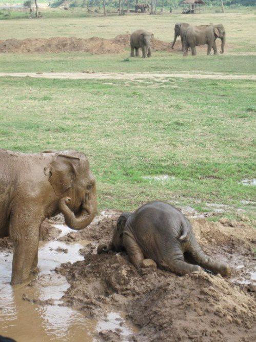 elephant tantrum