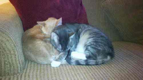 Erin's cats